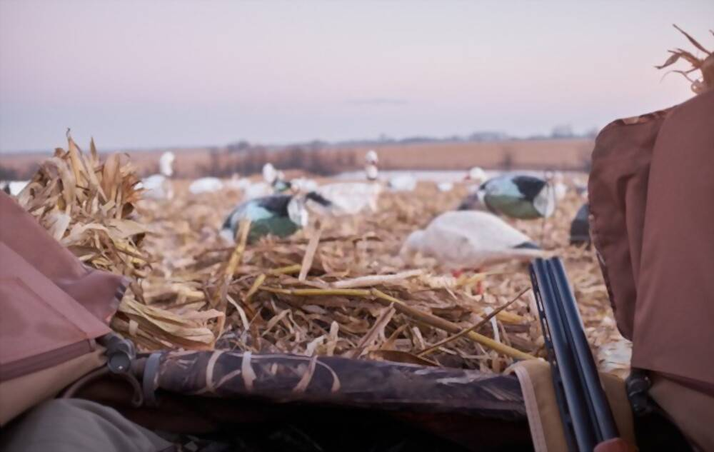 Best Chokes for Duck Hunting